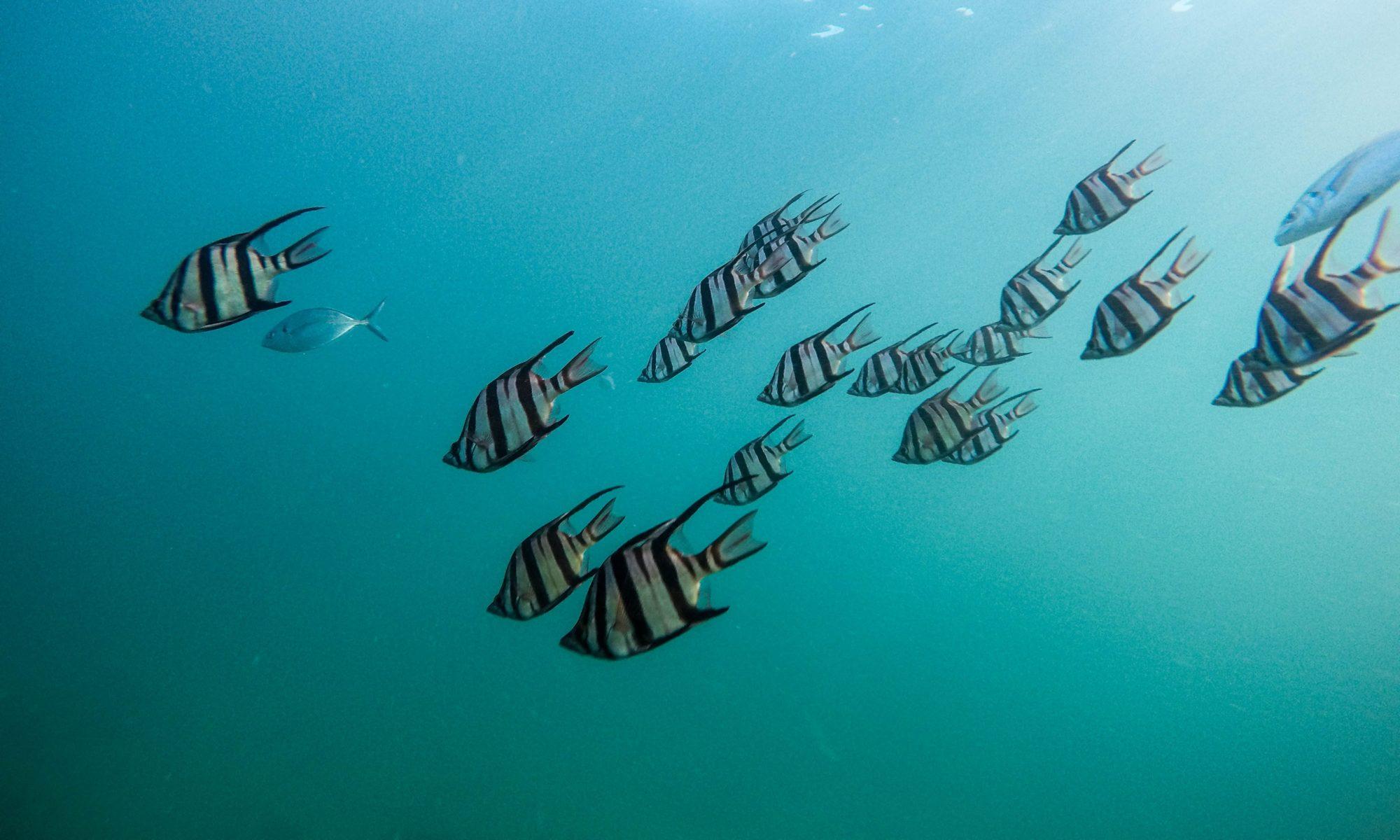 Diseño comprometido con la conservación marina.